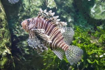 St Malo Aquarium