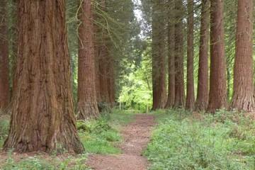 Hockeridge Woods